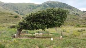 Yıldız Koyu'ndaki aşırı rüzgardan nasibini alan bir ağaç