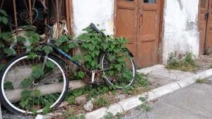 Köyceğiz'de unutulmuş bir bisiklet